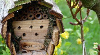 Una casetta per gli amici insetti